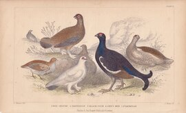 Grouse & Partridge