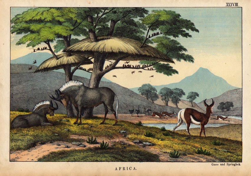 Gnu & Springbok