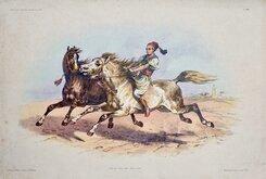 Turkish Horses