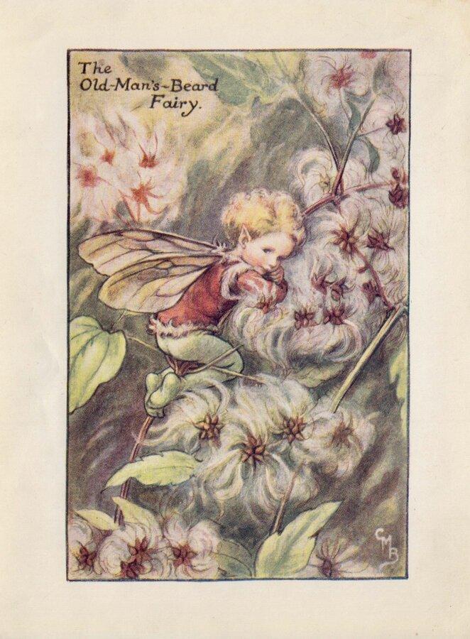 Old Mans Beard Fairy