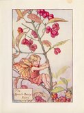 Spindle Berry Fairy