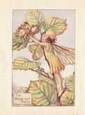 Hazlenut Fairy
