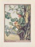 Elm Tree Fairy