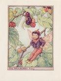 Mulberry Fairy